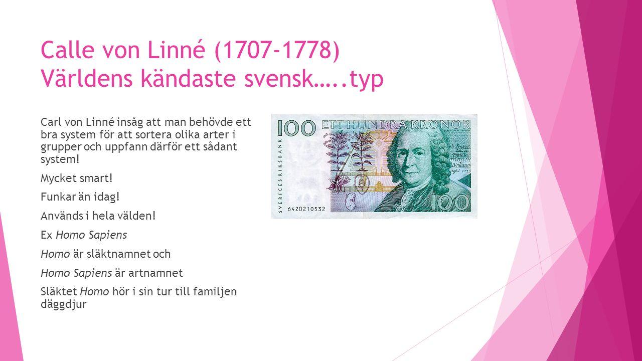 Calle von Linné (1707-1778) Världens kändaste svensk…..typ Carl von Linné insåg att man behövde ett bra system för att sortera olika arter i grupper och uppfann därför ett sådant system.