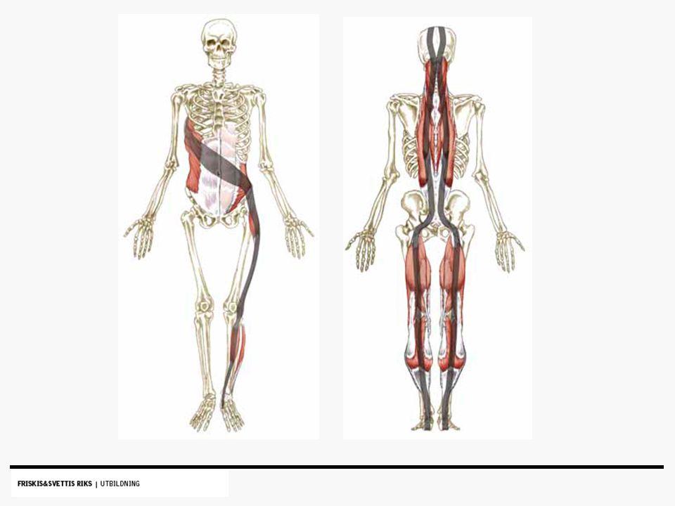 stretching höjer prestationsförmågan