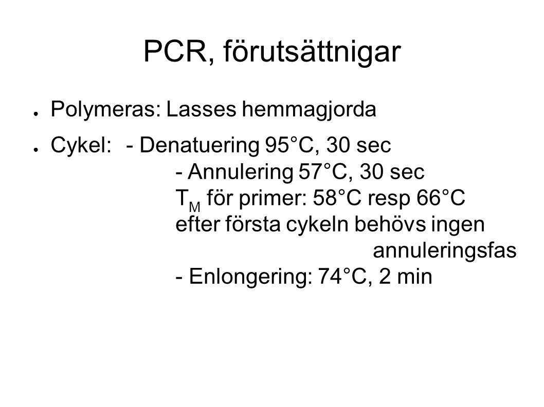 PCR, förutsättnigar ● Polymeras: Lasses hemmagjorda ● Cykel: - Denatuering 95°C, 30 sec - Annulering 57°C, 30 sec T M för primer: 58°C resp 66°C efter första cykeln behövs ingen annuleringsfas - Enlongering: 74°C, 2 min