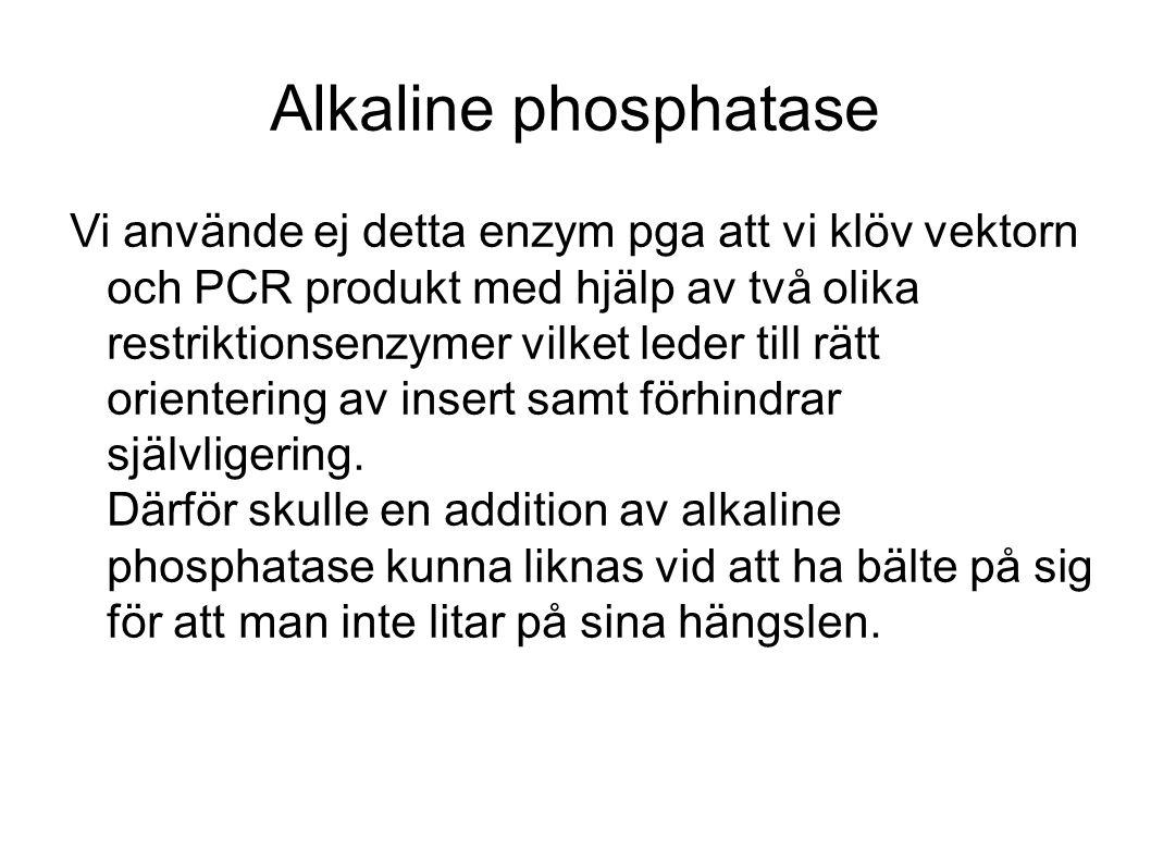 Alkaline phosphatase Vi använde ej detta enzym pga att vi klöv vektorn och PCR produkt med hjälp av två olika restriktionsenzymer vilket leder till rätt orientering av insert samt förhindrar självligering.