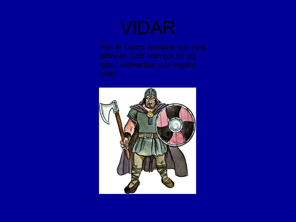 VIDAR Han är Odens tystlåtne son med jättinnan Grid. Han bor för sig själv i vildmarken runt Asgård, Videt.