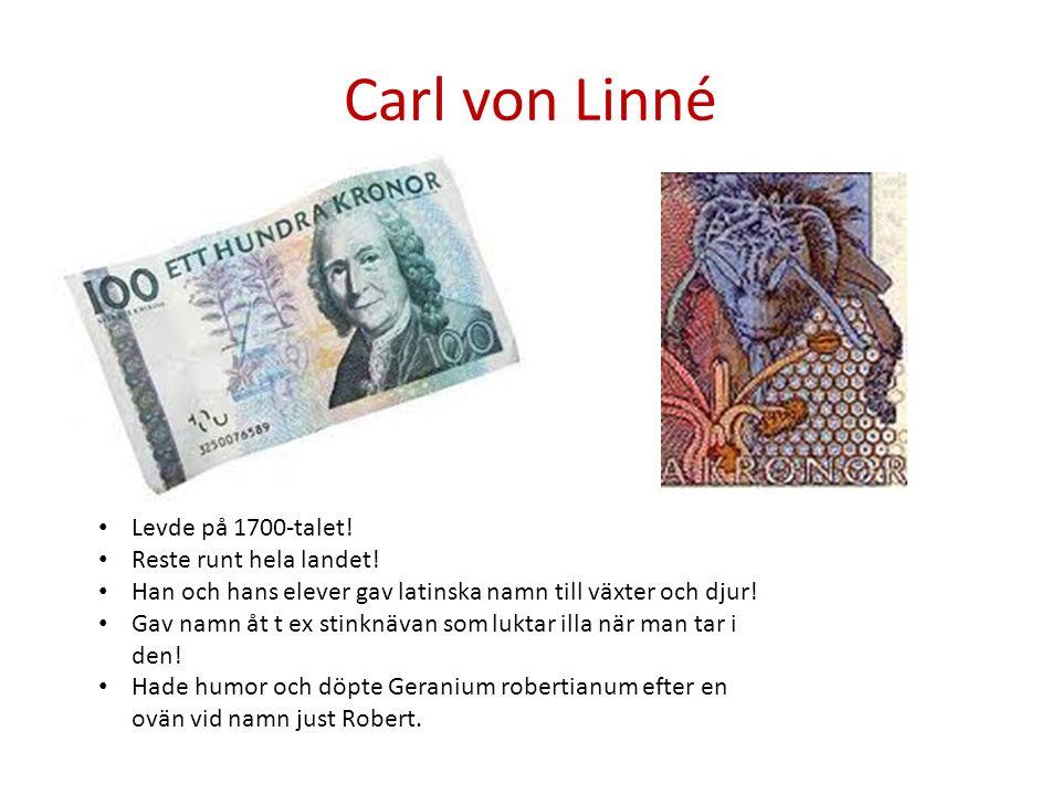 Carl von Linné Levde på 1700-talet! Reste runt hela landet! Han och hans elever gav latinska namn till växter och djur! Gav namn åt t ex stinknävan so
