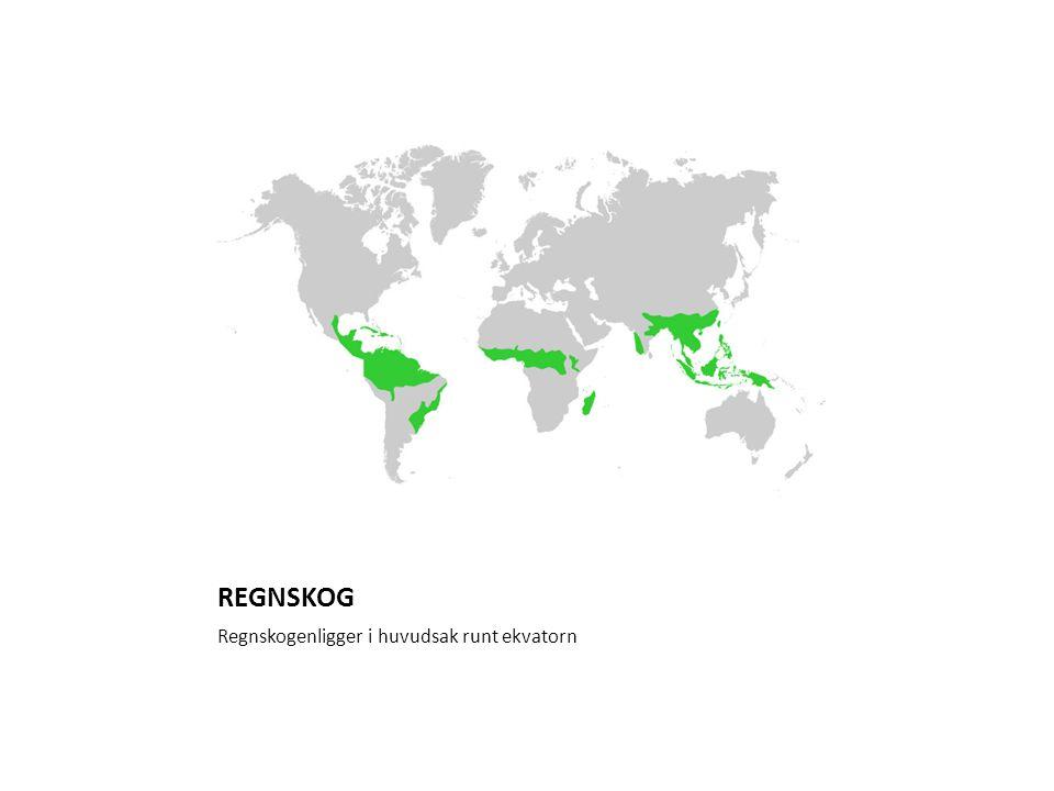 REGNSKOG I regnskogen är det varmt och fuktigt.Här finns mer än hälften av alla världens arter.