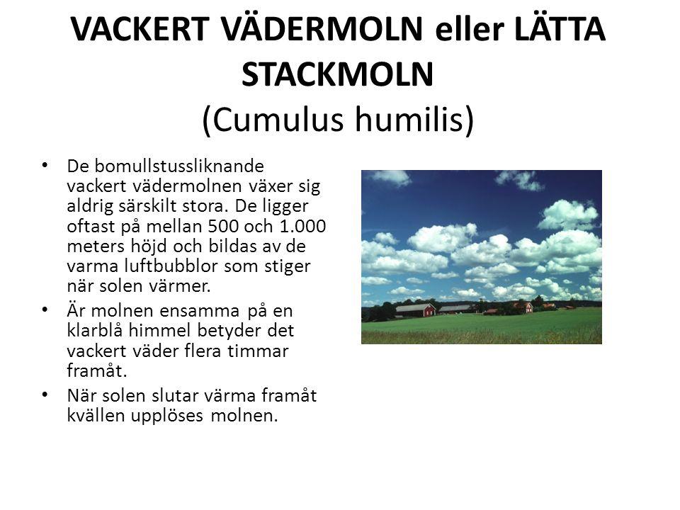VACKERT VÄDERMOLN eller LÄTTA STACKMOLN (Cumulus humilis) De bomullstussliknande vackert vädermolnen växer sig aldrig särskilt stora.