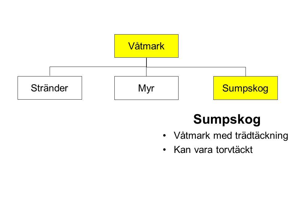 Våtmark Myr Stränder Sumpskog Våtmark med trädtäckning Kan vara torvtäckt