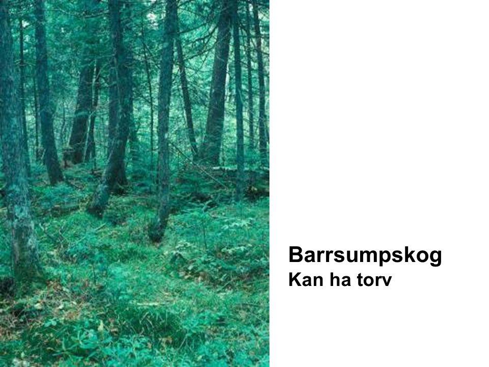 Barrsumpskog Kan ha torv