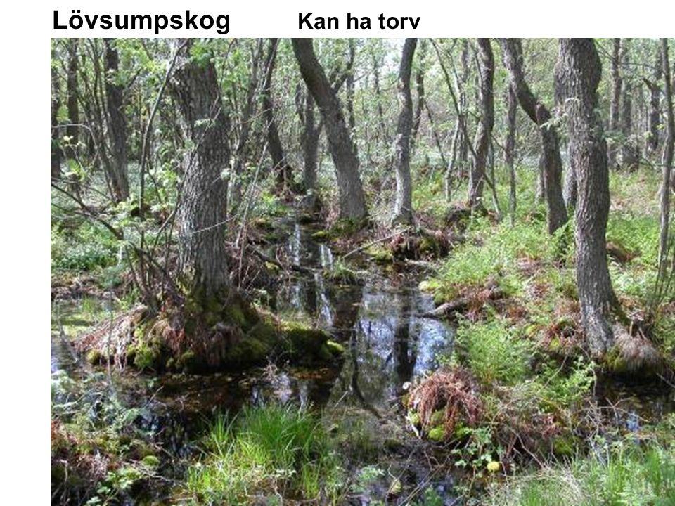 Lövsumpskog Kan ha torv