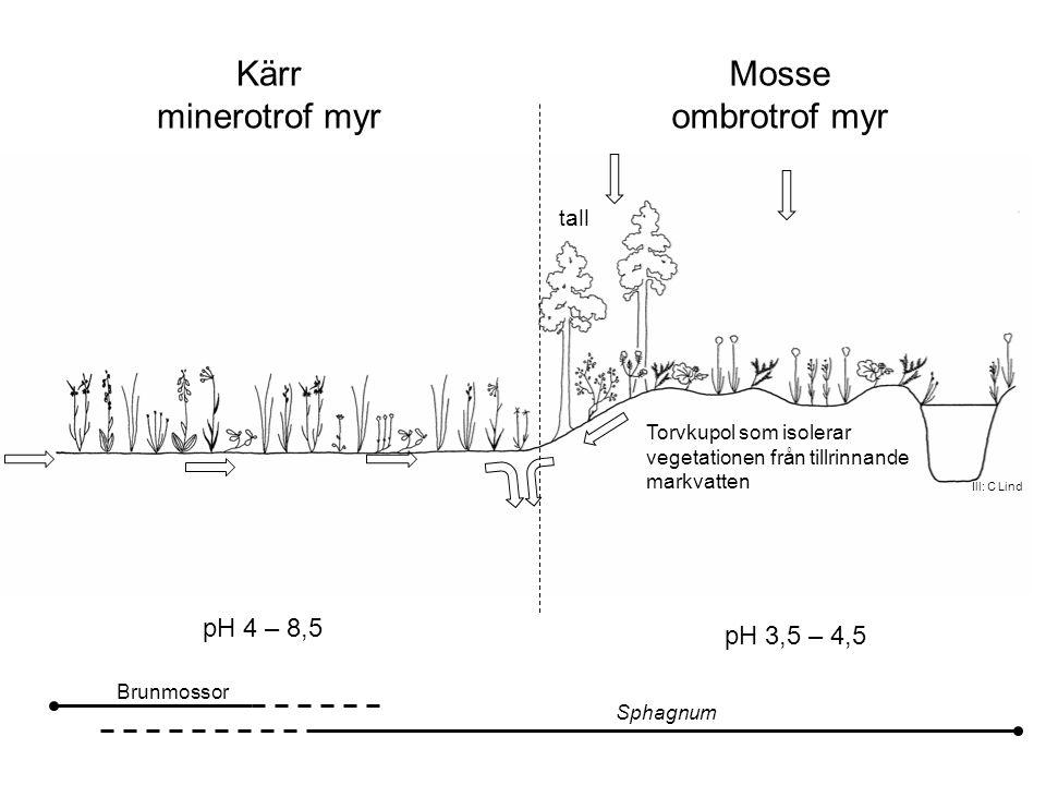 Torvkupol som isolerar vegetationen från tillrinnande markvatten tall Ill: C Lind Kärr minerotrof myr Mosse ombrotrof myr pH 4 – 8,5 Brunmossor Sphagnum pH 3,5 – 4,5