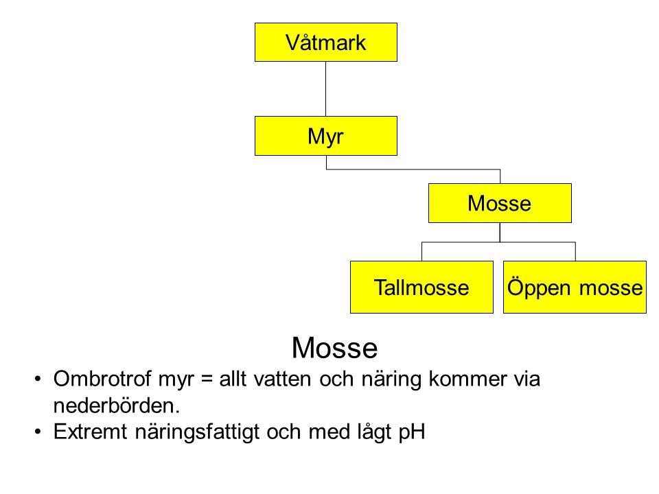 Våtmark TallmosseÖppen mosse Mosse Myr Mosse Ombrotrof myr = allt vatten och näring kommer via nederbörden.