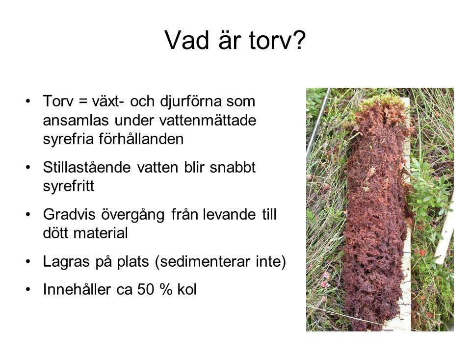 Torv = växt- och djurförna som ansamlas under vattenmättade syrefria förhållanden Stillastående vatten blir snabbt syrefritt Gradvis övergång från levande till dött material Lagras på plats (sedimenterar inte) Innehåller ca 50 % kol Vad är torv