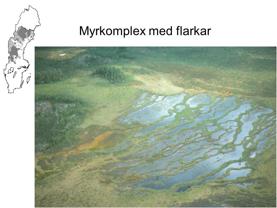 Myrkomplex med flarkar