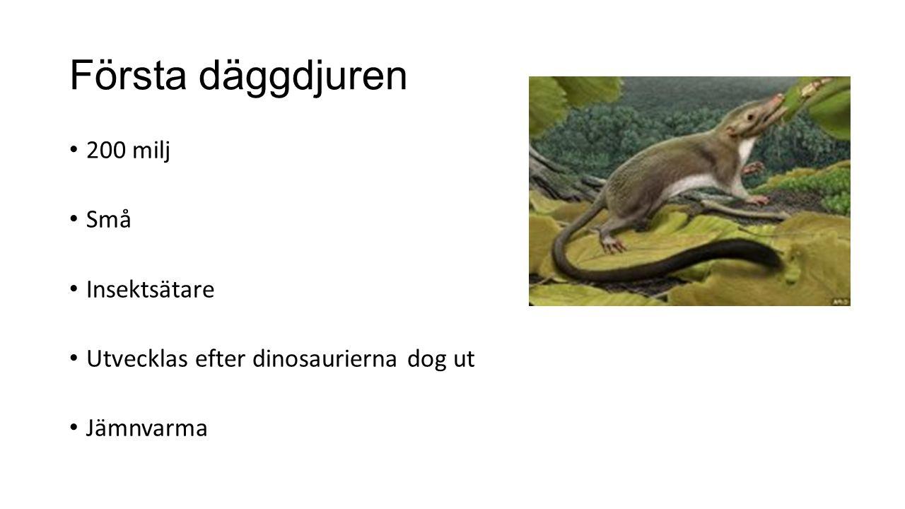 Första däggdjuren 200 milj Små Insektsätare Utvecklas efter dinosaurierna dog ut Jämnvarma