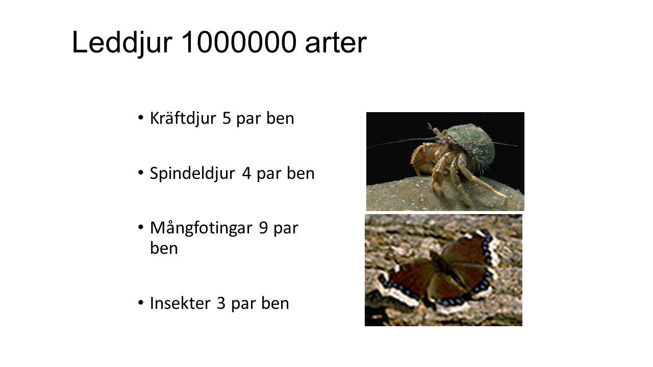 Leddjur 1000000 arter Kräftdjur 5 par ben Spindeldjur 4 par ben Mångfotingar 9 par ben Insekter 3 par ben