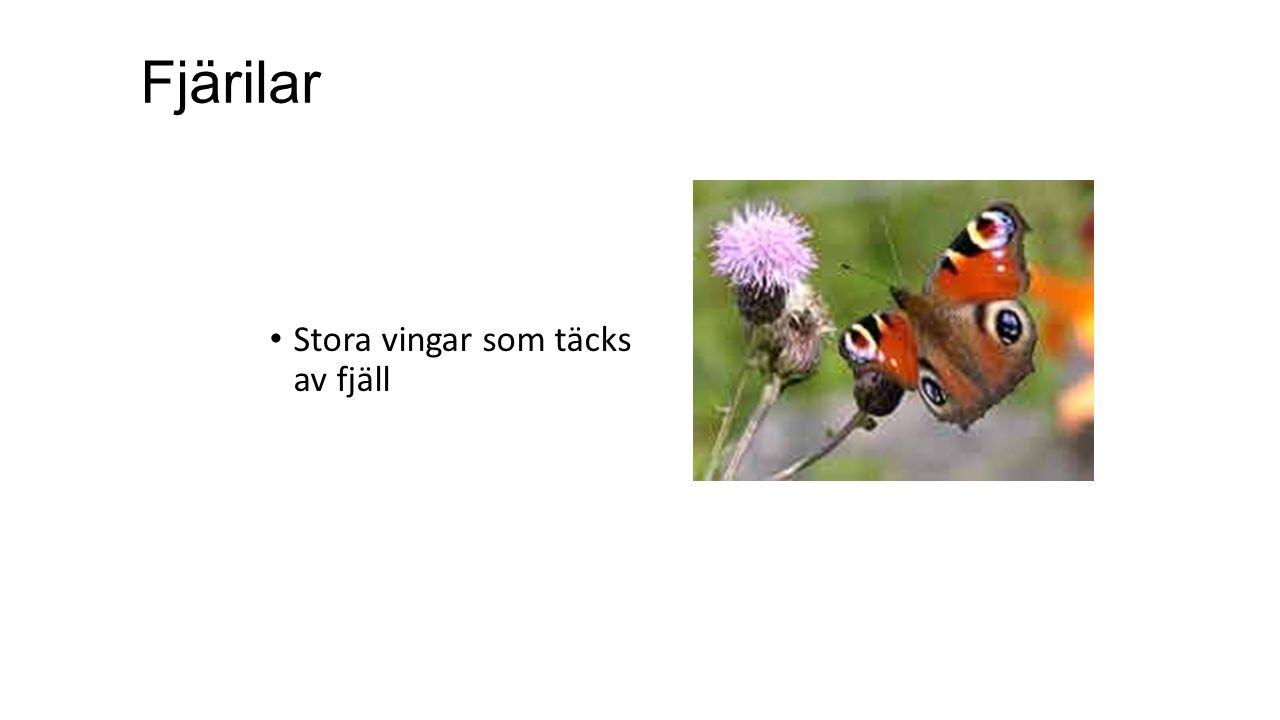 Fjärilar Stora vingar som täcks av fjäll
