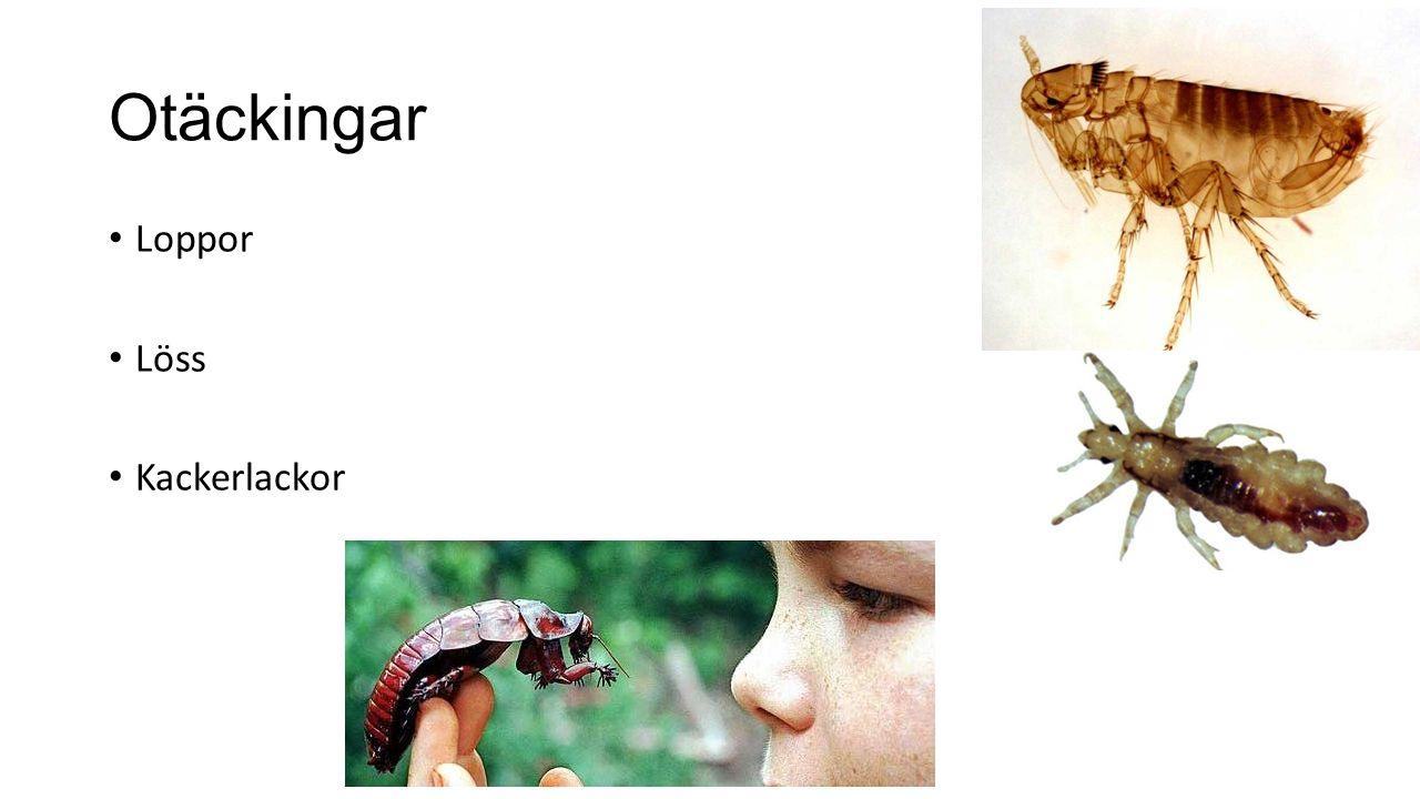 Otäckingar Loppor Löss Kackerlackor