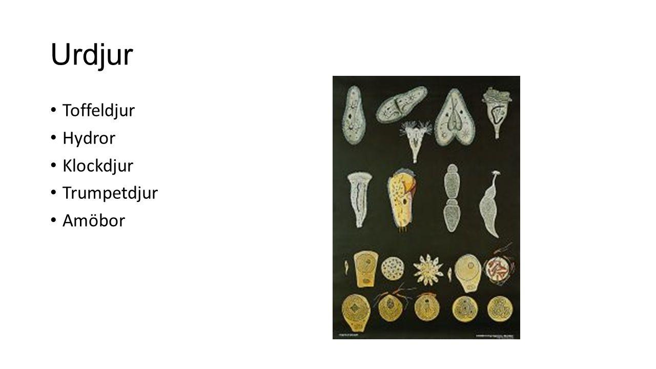Urdjur Toffeldjur Hydror Klockdjur Trumpetdjur Amöbor