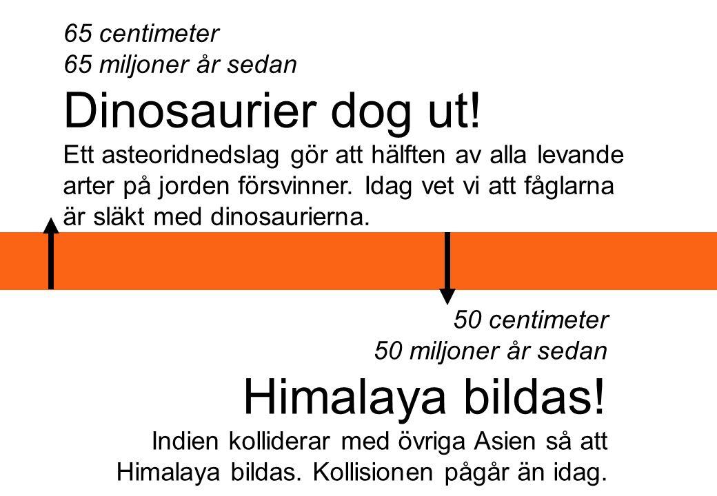 65 centimeter 65 miljoner år sedan Dinosaurier dog ut! Ett asteoridnedslag gör att hälften av alla levande arter på jorden försvinner. Idag vet vi att