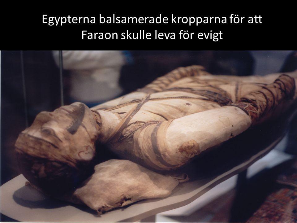 Egypterna balsamerade kropparna för att Faraon skulle leva för evigt