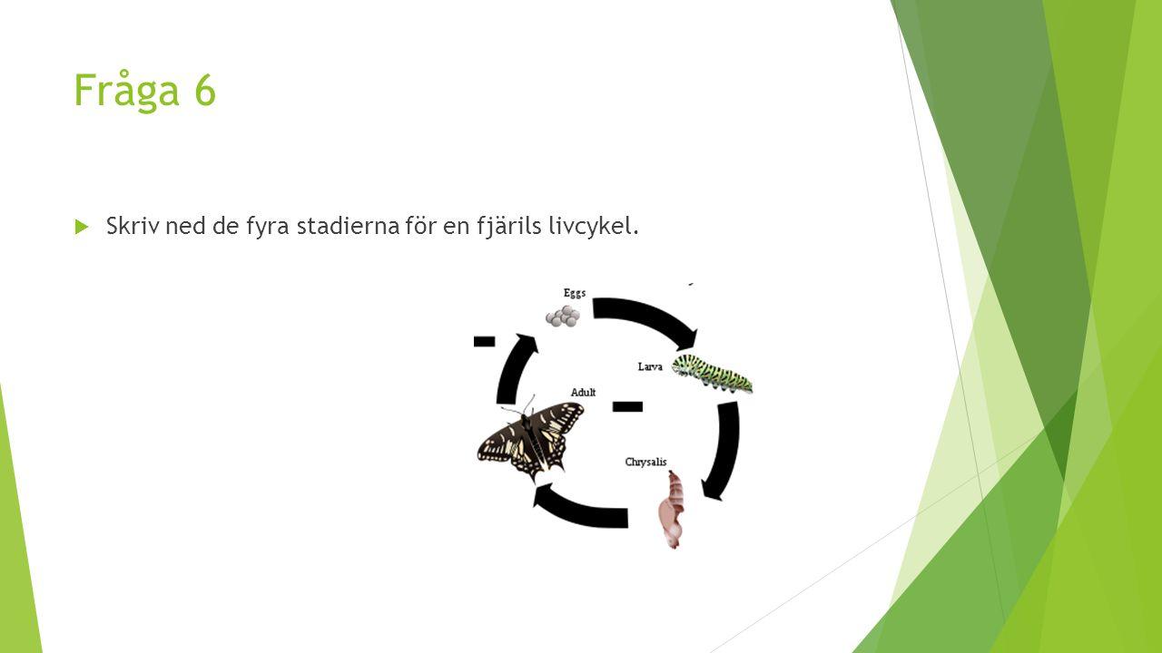Fråga 6  Skriv ned de fyra stadierna för en fjärils livcykel.