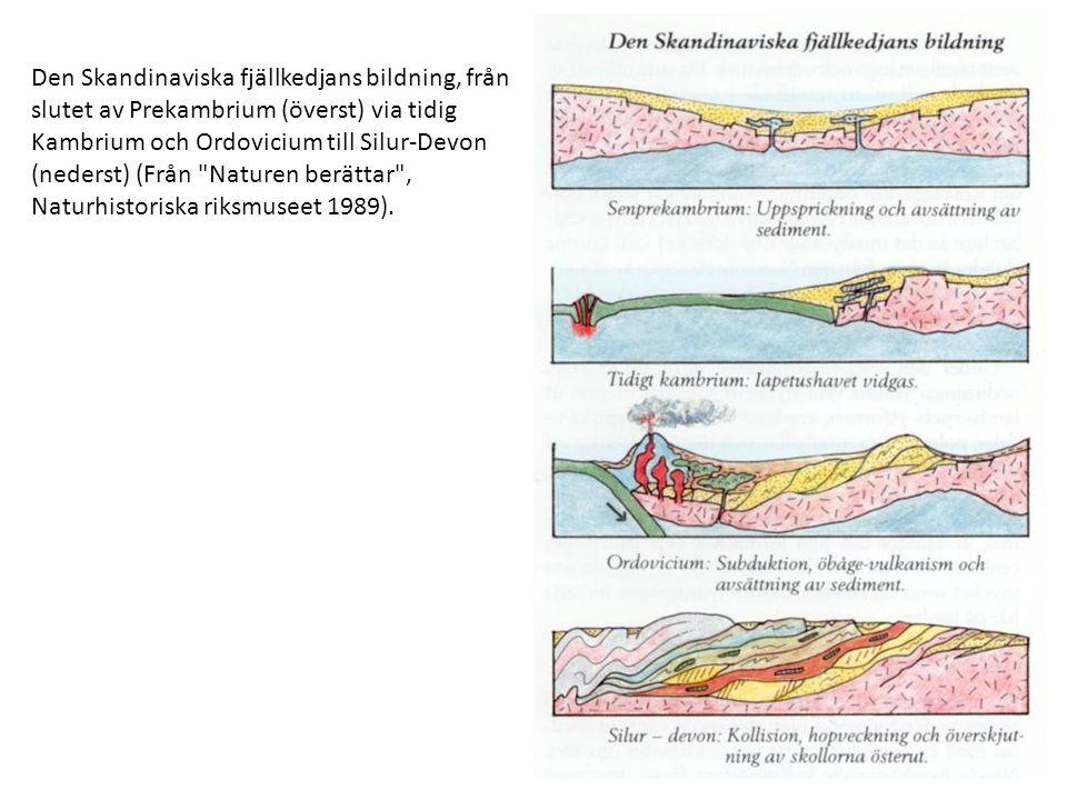 Den Skandinaviska fjällkedjans bildning, från slutet av Prekambrium (överst) via tidig Kambrium och Ordovicium till Silur-Devon (nederst) (Från Naturen berättar , Naturhistoriska riksmuseet 1989).