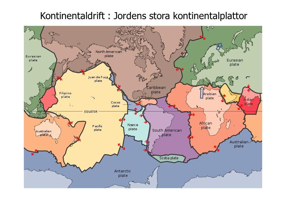 Kontinentaldrift : Jordens stora kontinentalplattor