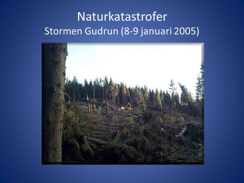Naturkatastrofer Stormen Gudrun (8-9 januari 2005)
