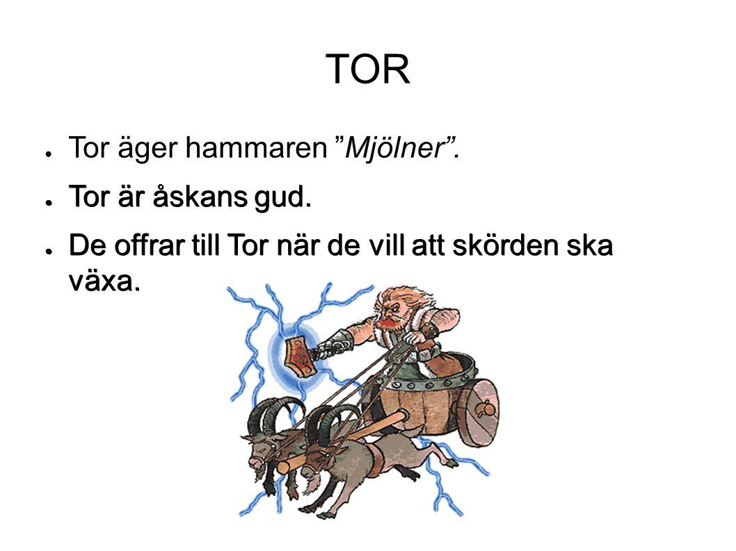 """TOR ● Tor äger hammaren """"Mjölner"""". ● Tor är åskans gud. ● De offrar till Tor när de vill att skörden ska växa."""