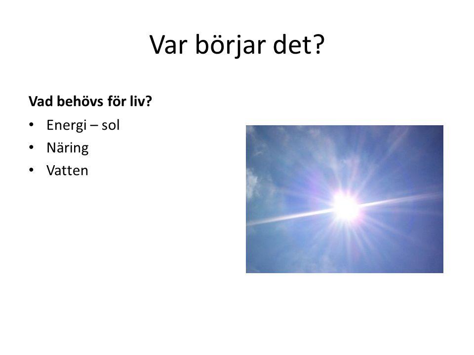 Var börjar det? Vad behövs för liv? Energi – sol Näring Vatten