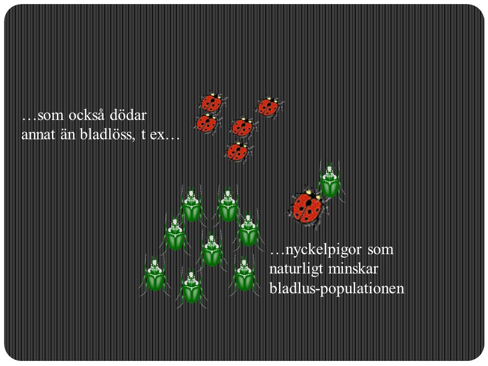 …som också dödar annat än bladlöss, t ex… …nyckelpigor som naturligt minskar bladlus-populationen