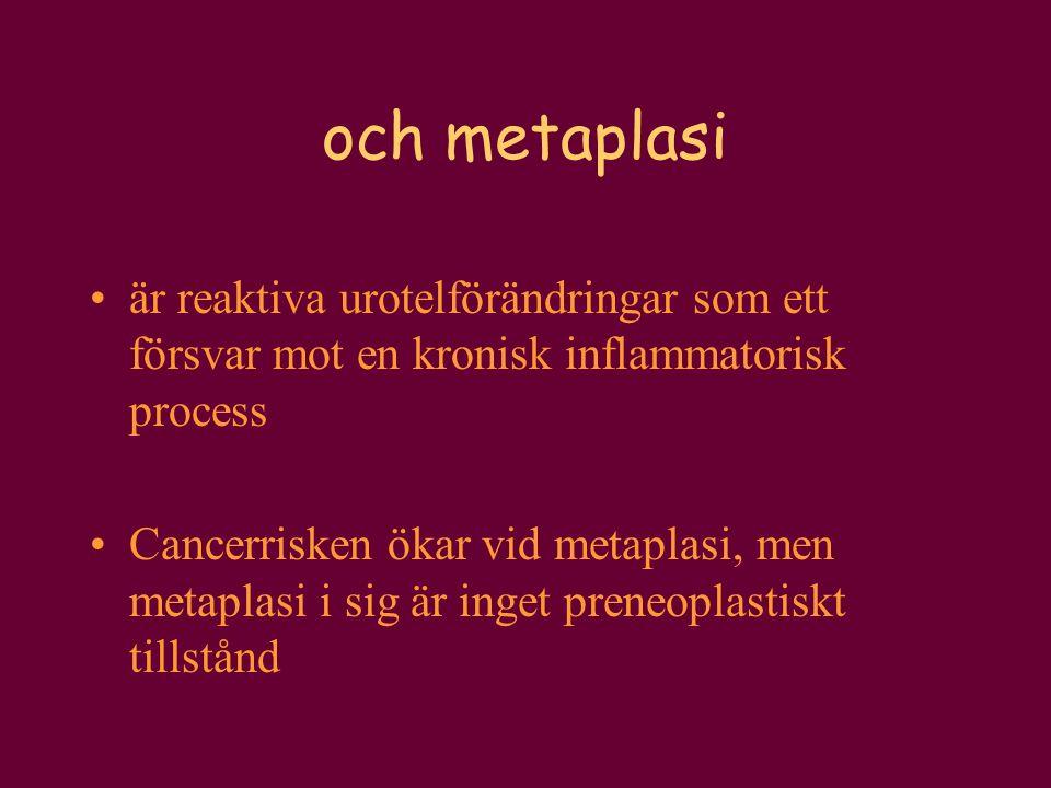 och metaplasi är reaktiva urotelförändringar som ett försvar mot en kronisk inflammatorisk process Cancerrisken ökar vid metaplasi, men metaplasi i si