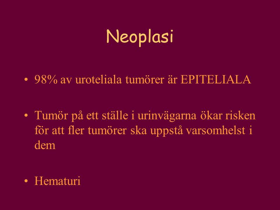 Neoplasi 98% av uroteliala tumörer är EPITELIALA Tumör på ett ställe i urinvägarna ökar risken för att fler tumörer ska uppstå varsomhelst i dem Hemat