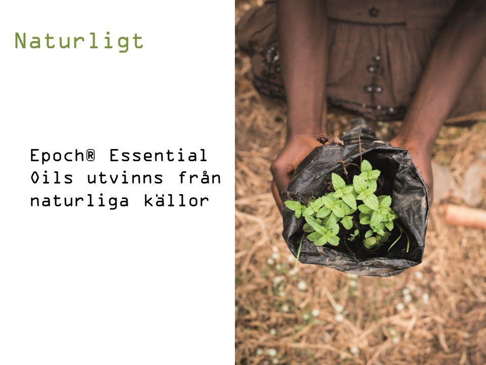 Epoch-serien, gjord i samklang med naturen sedan 1996 Vi presenterar Epoch® Essential Oils Etnobotaniska lösningar som stärker de mänskliga kontakterna och skapar sinnesupplevelser Rätt produkter….