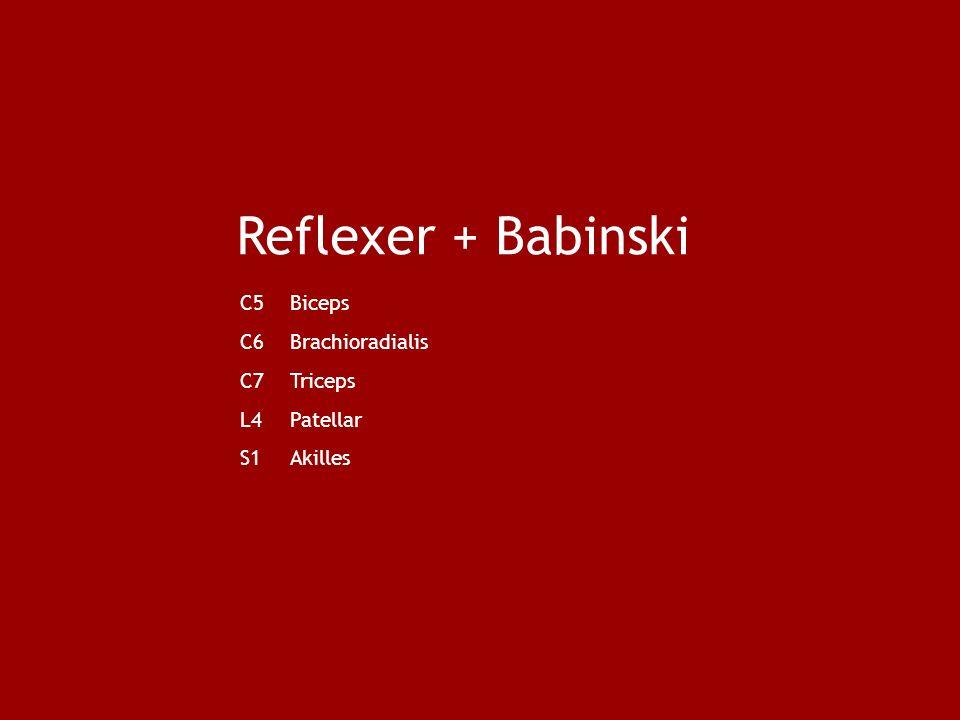 Reflexer + Babinski C5Biceps C6Brachioradialis C7Triceps L4Patellar S1Akilles
