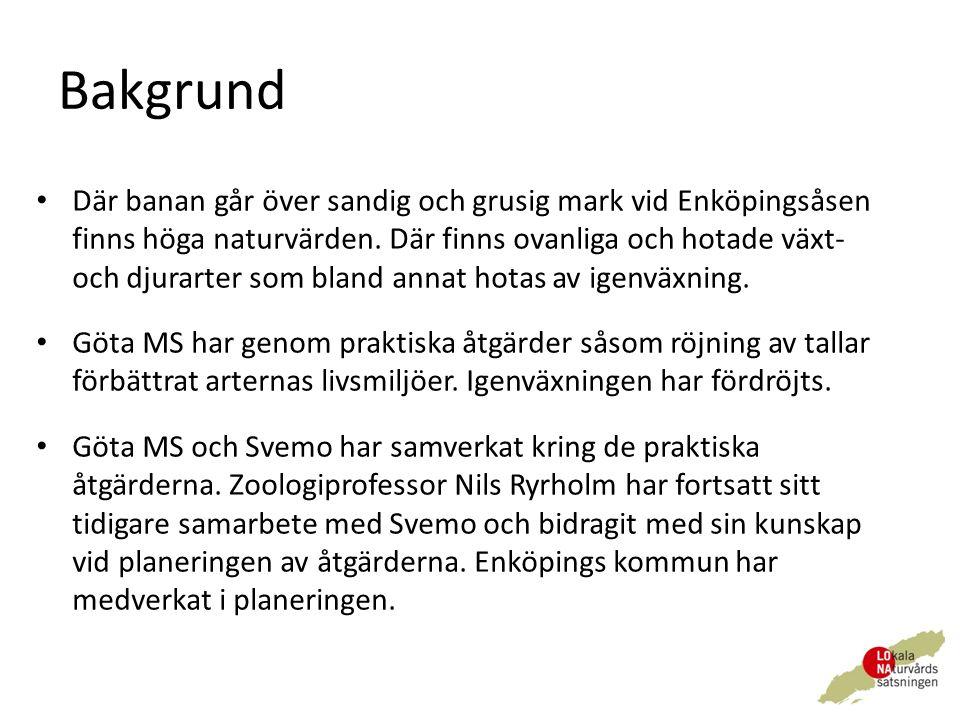 Bakgrund Där banan går över sandig och grusig mark vid Enköpingsåsen finns höga naturvärden.