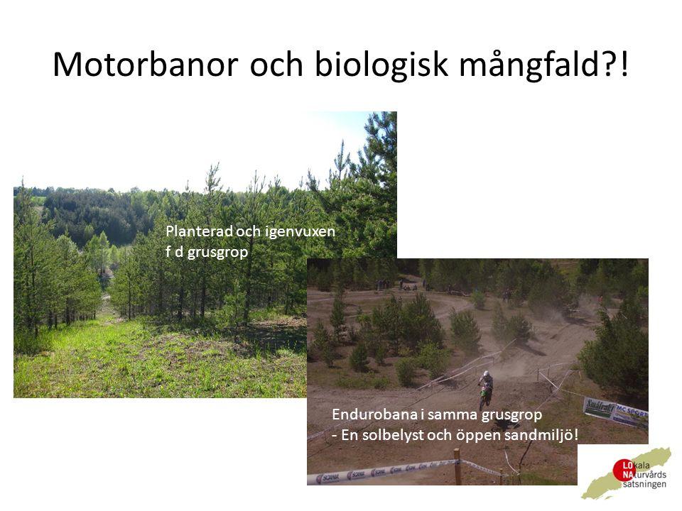 Motorbanor och biologisk mångfald .