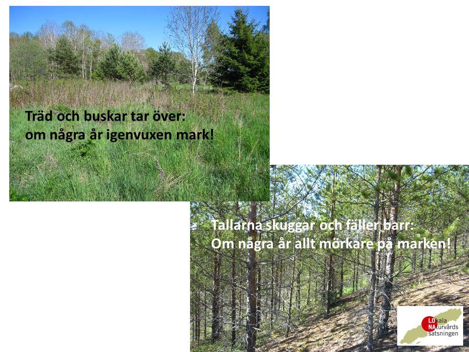 Träd och buskar tar över: om några år igenvuxen mark.