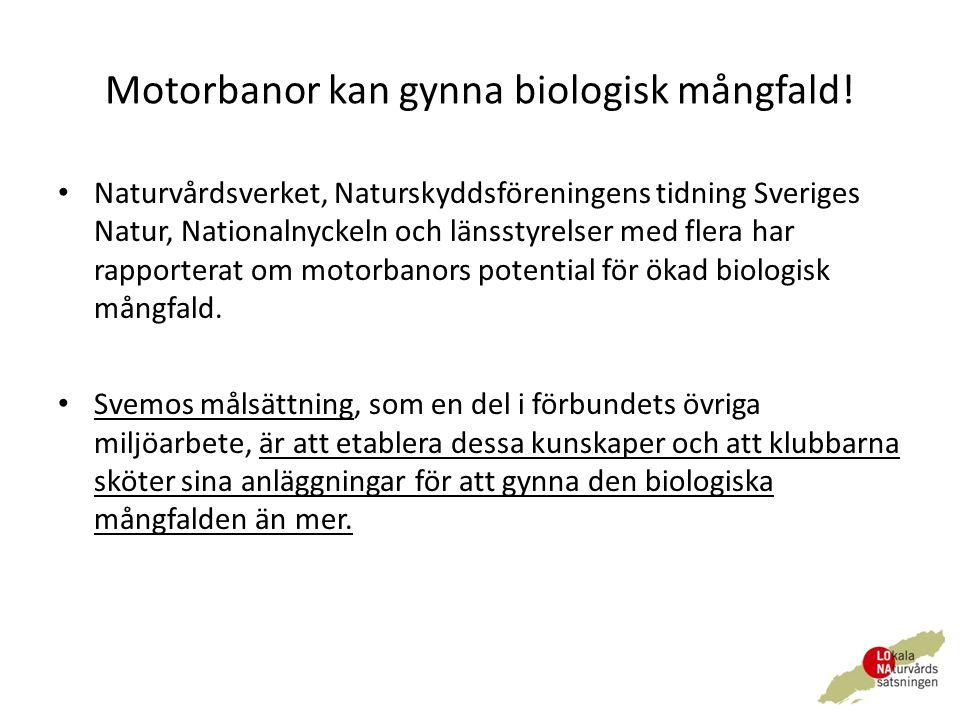 Motorbanor kan gynna biologisk mångfald.