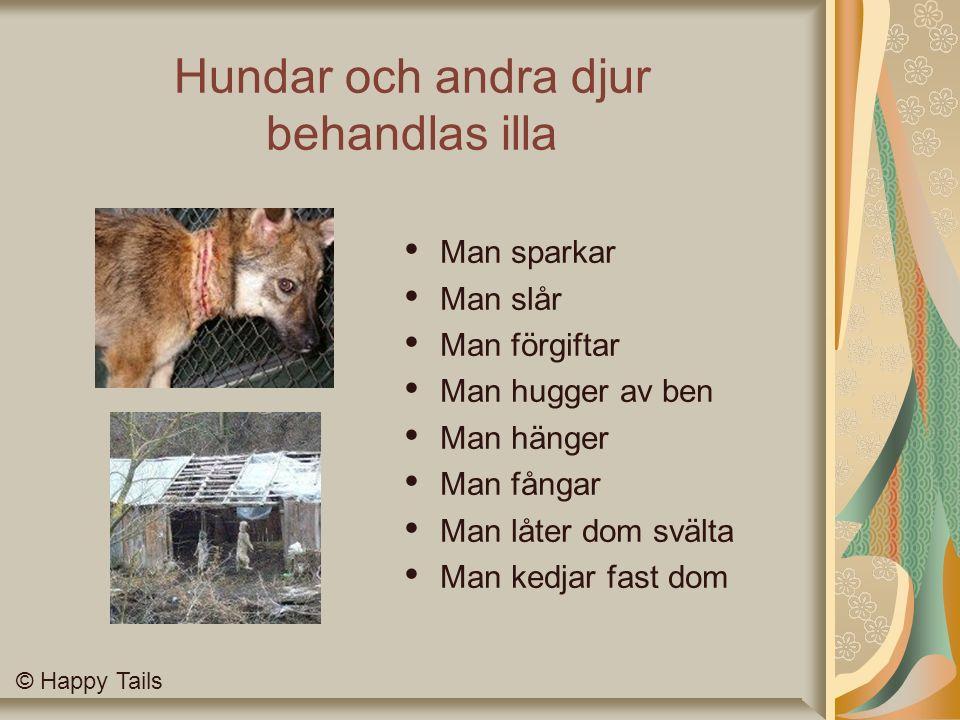 Hundar och andra djur behandlas illa Man sparkar Man slår Man förgiftar Man hugger av ben Man hänger Man fångar Man låter dom svälta Man kedjar fast dom © Happy Tails