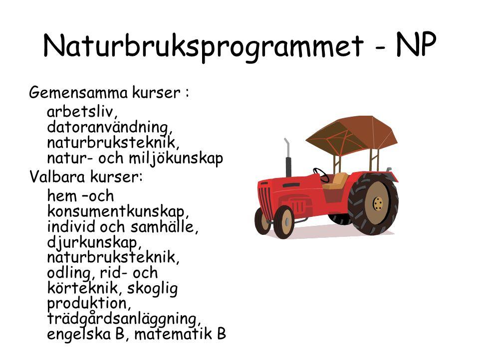 Naturbruksprogrammet - NP Gemensamma kurser : arbetsliv, datoranvändning, naturbruksteknik, natur- och miljökunskap Valbara kurser: hem –och konsumentkunskap, individ och samhälle, djurkunskap, naturbruksteknik, odling, rid- och körteknik, skoglig produktion, trädgårdsanläggning, engelska B, matematik B