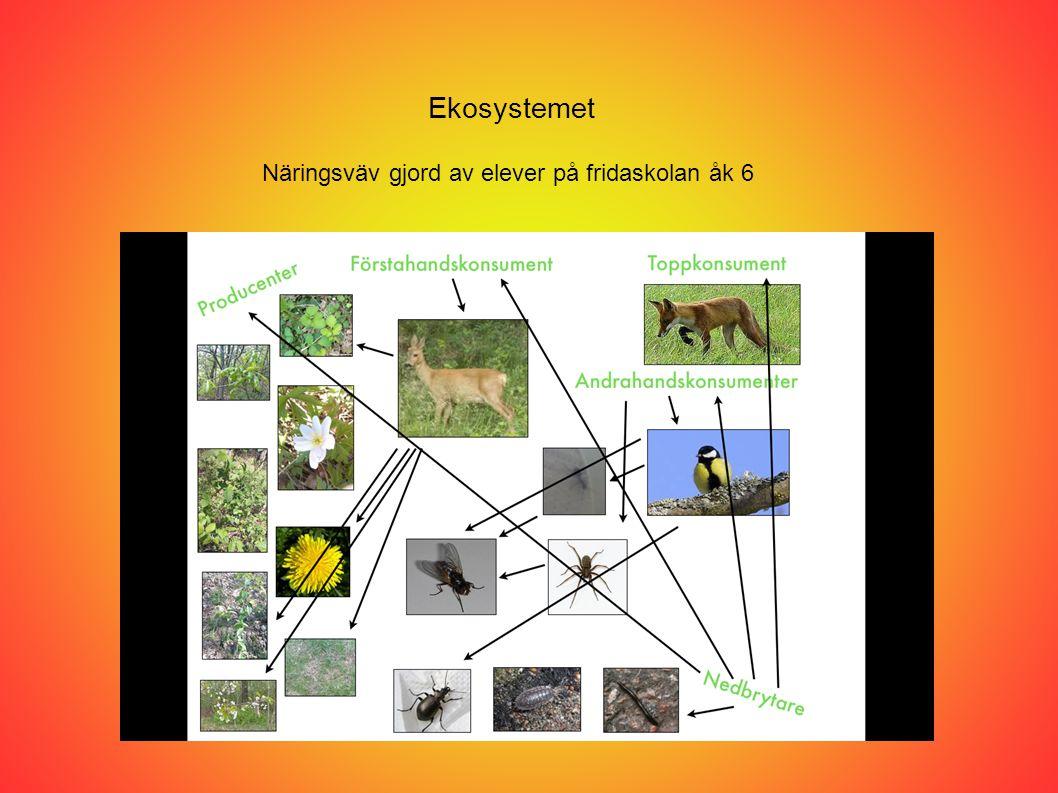Ekosystemet Näringsväv gjord av elever på fridaskolan åk 6
