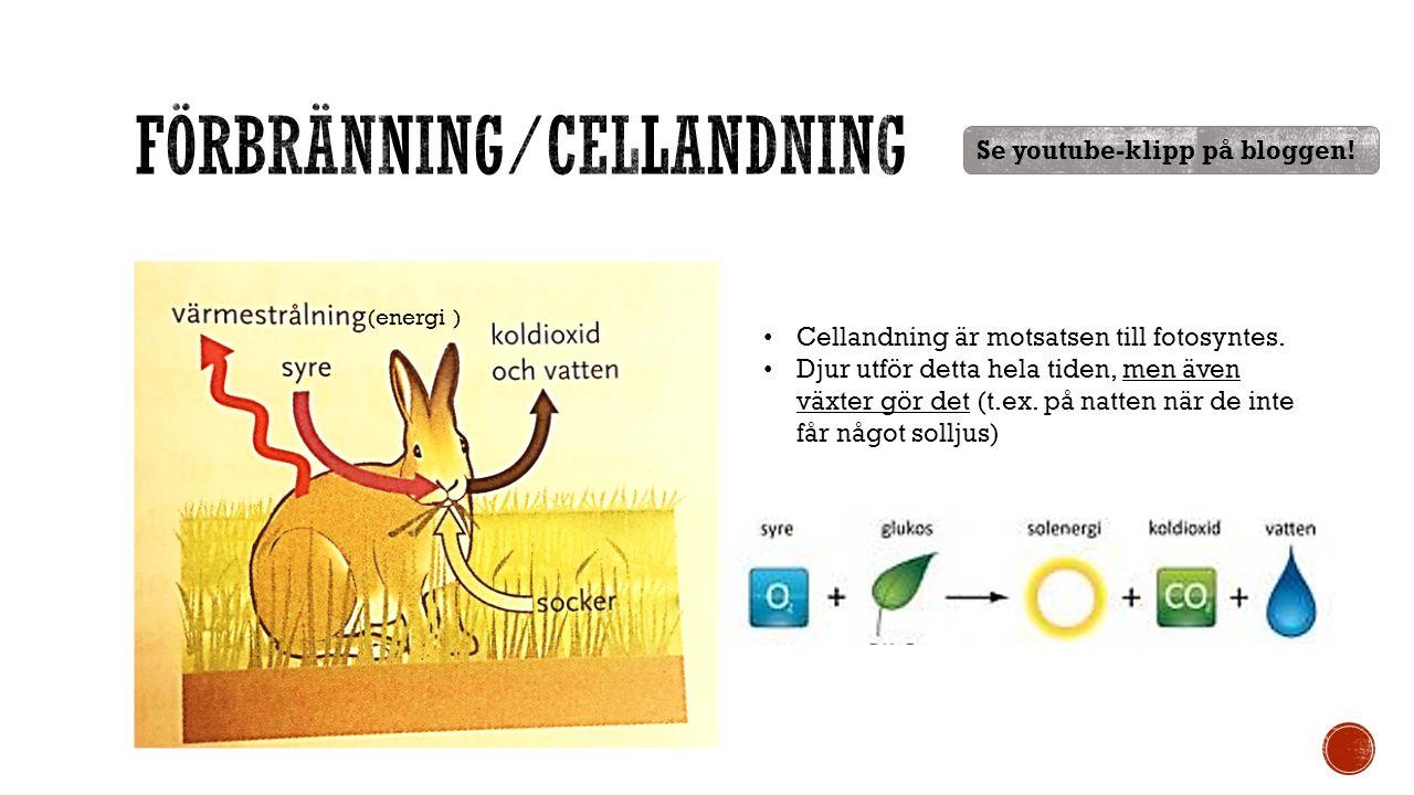 (energi ) Cellandning är motsatsen till fotosyntes.