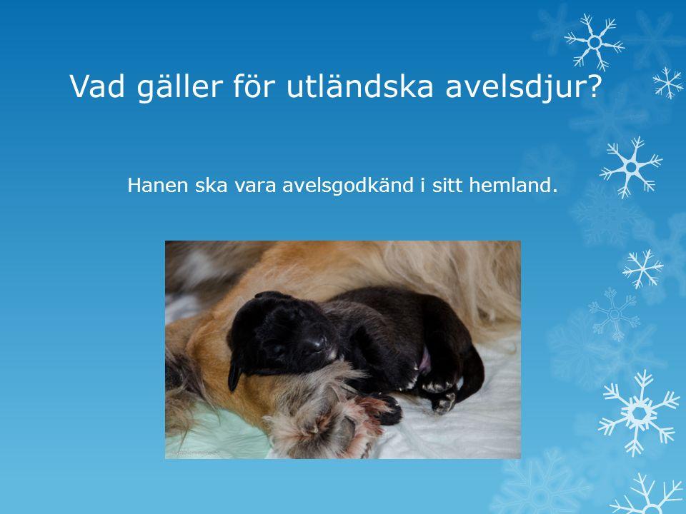 Vilka faktorer påverkar hundens index.