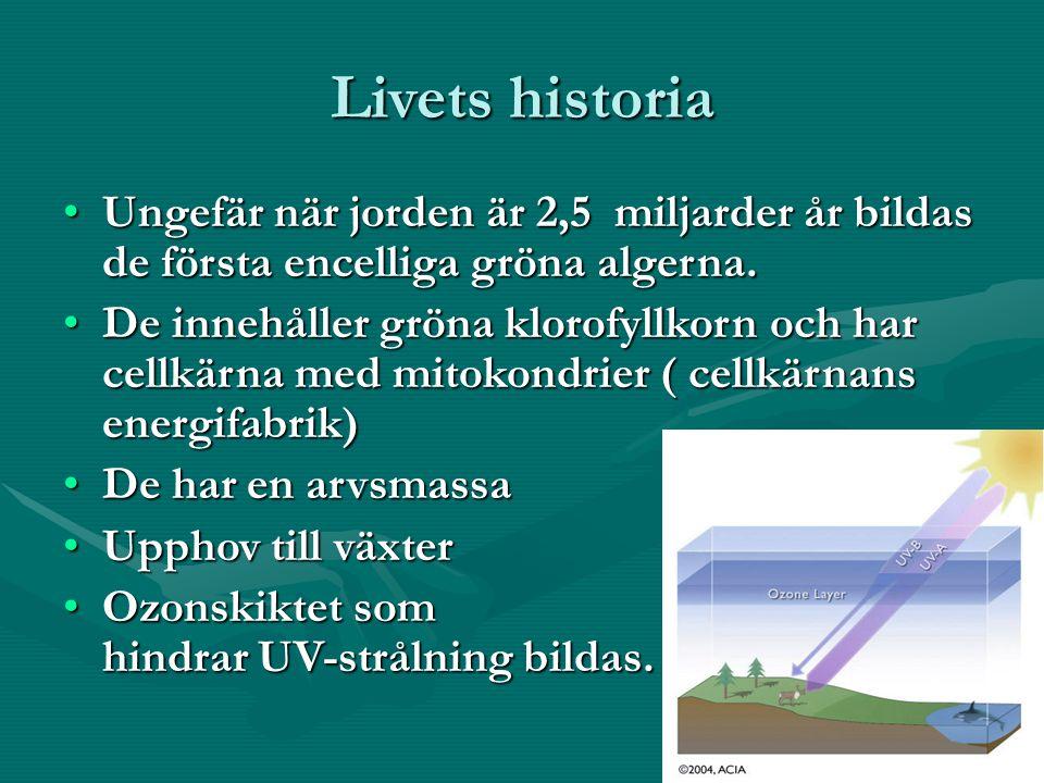 Livets historia Ungefär när jorden är 2,5 miljarder år bildas de första encelliga gröna algerna.Ungefär när jorden är 2,5 miljarder år bildas de första encelliga gröna algerna.