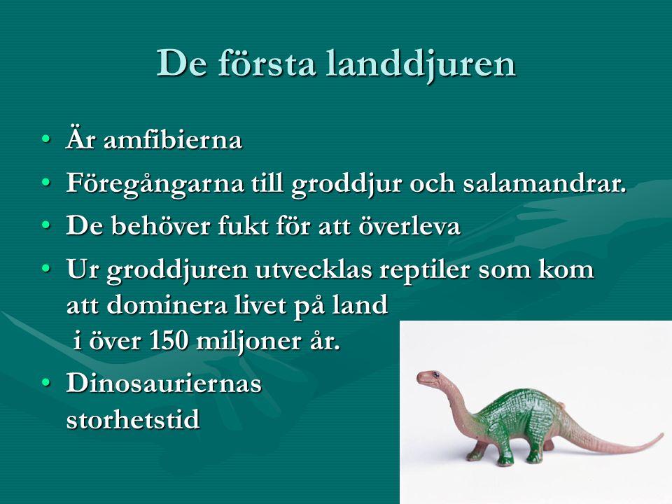 De första landdjuren Är amfibiernaÄr amfibierna Föregångarna till groddjur och salamandrar.Föregångarna till groddjur och salamandrar.