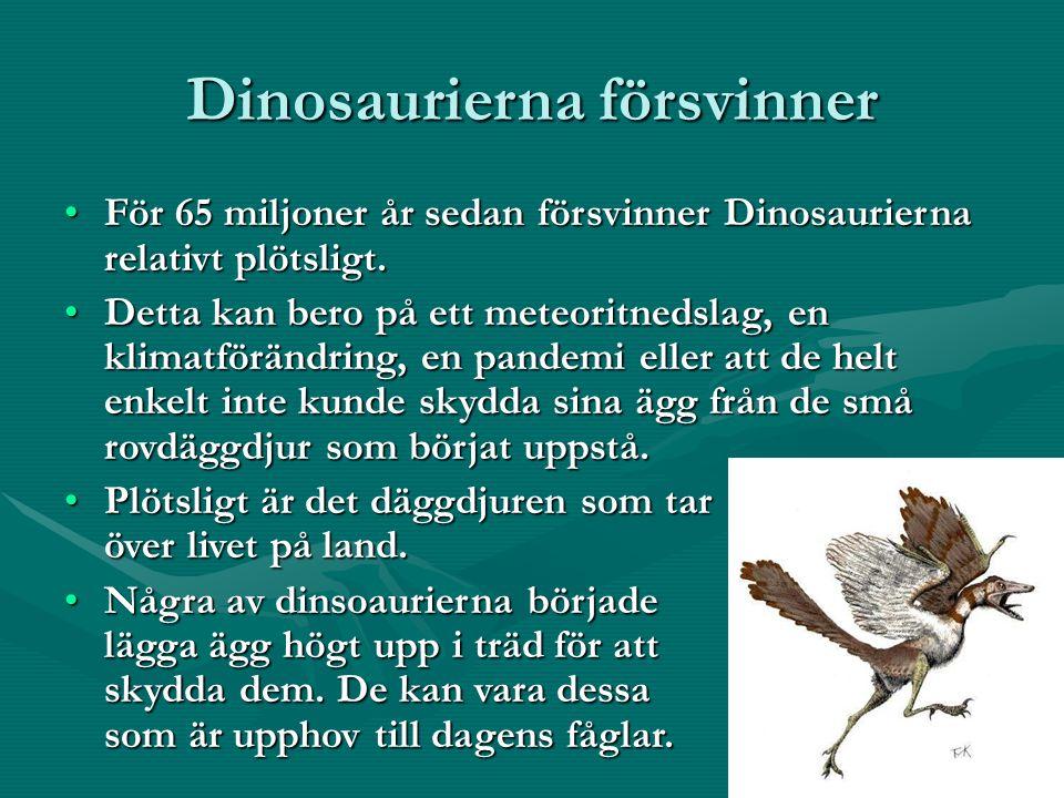 Dinosaurierna försvinner För 65 miljoner år sedan försvinner Dinosaurierna relativt plötsligt.För 65 miljoner år sedan försvinner Dinosaurierna relativt plötsligt.