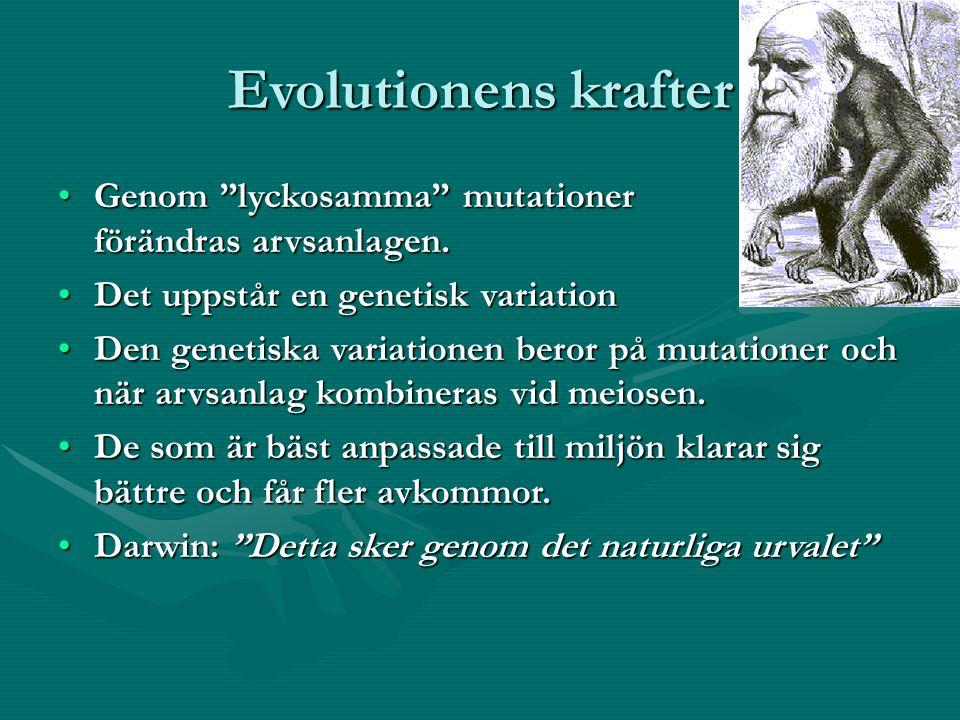 Evolutionens krafter Genom lyckosamma mutationer förändras arvsanlagen.Genom lyckosamma mutationer förändras arvsanlagen.