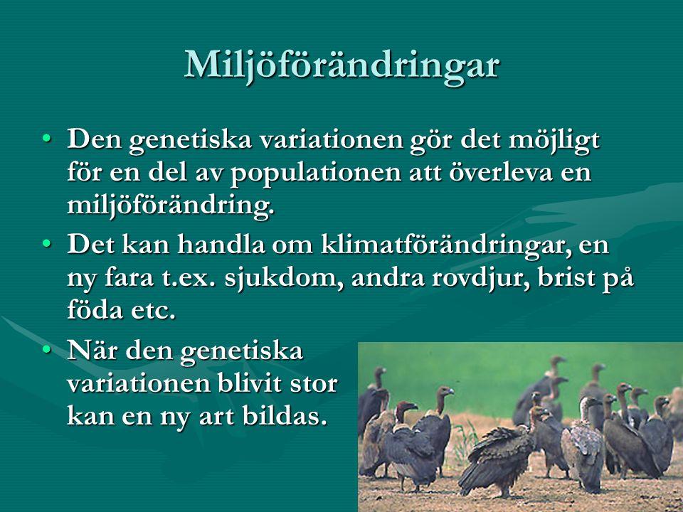 Miljöförändringar Den genetiska variationen gör det möjligt för en del av populationen att överleva en miljöförändring.Den genetiska variationen gör det möjligt för en del av populationen att överleva en miljöförändring.