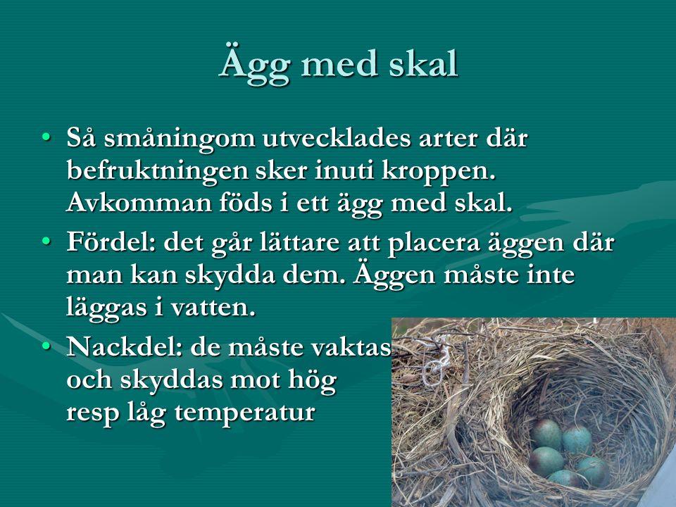 Ägg med skal Så småningom utvecklades arter där befruktningen sker inuti kroppen.