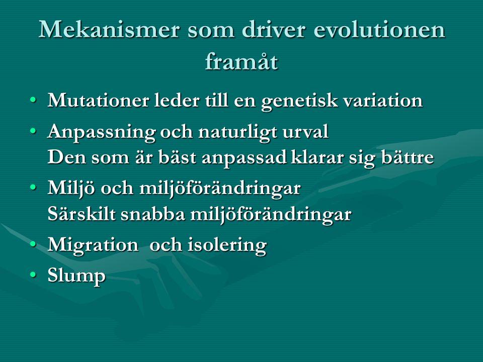 Mekanismer som driver evolutionen framåt Mutationer leder till en genetisk variationMutationer leder till en genetisk variation Anpassning och naturligt urval Den som är bäst anpassad klarar sig bättreAnpassning och naturligt urval Den som är bäst anpassad klarar sig bättre Miljö och miljöförändringar Särskilt snabba miljöförändringarMiljö och miljöförändringar Särskilt snabba miljöförändringar Migration och isoleringMigration och isolering SlumpSlump
