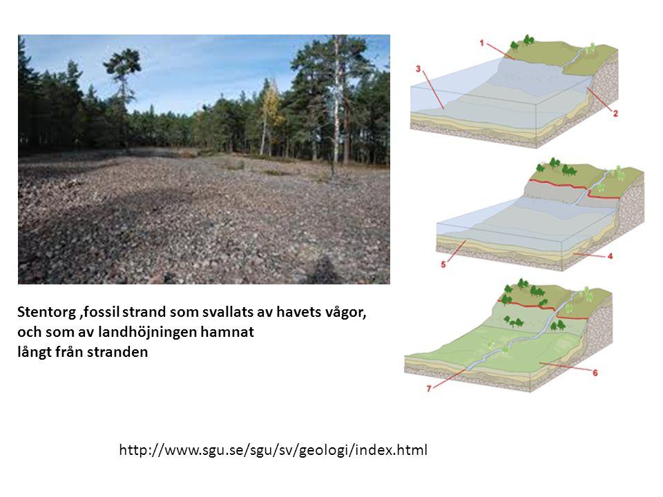 Stentorg,fossil strand som svallats av havets vågor, och som av landhöjningen hamnat långt från stranden http://www.sgu.se/sgu/sv/geologi/index.html